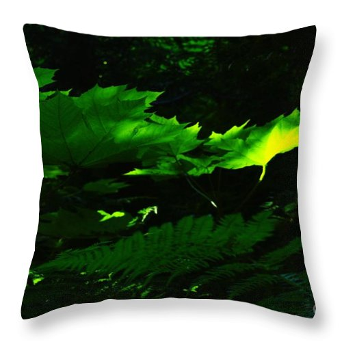 Devils Club Throw Pillow featuring the photograph Devils Club In The Light by Jeff Swan