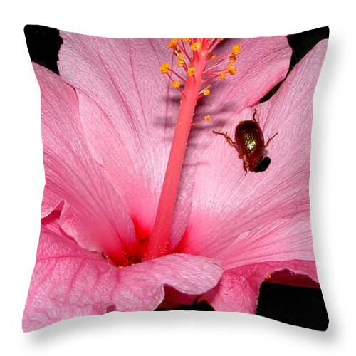 Insect Throw Pillow featuring the photograph Devour by David Weeks