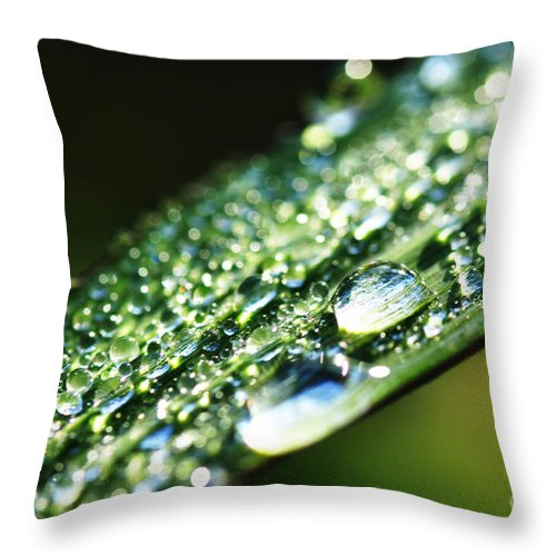 Dew Throw Pillow featuring the photograph Dew On Grass by Thomas R Fletcher