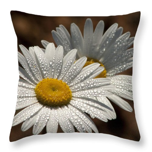 Daisy Throw Pillow featuring the photograph Dew Tell Oxeye Daisy Wildflowers by Kathy Clark