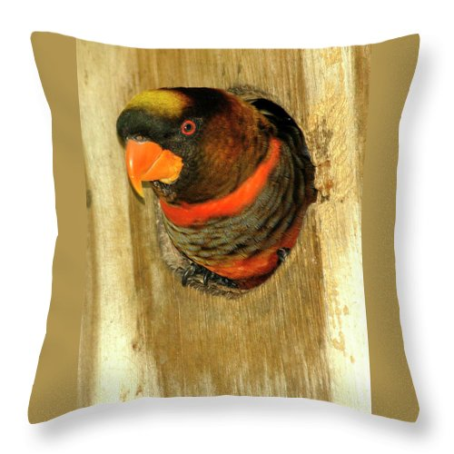 Parrot Throw Pillow featuring the photograph Did You Knock by Carolyn Marshall