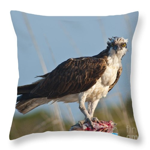 Birds Throw Pillow featuring the photograph Dining Osprey by Stephen Whalen