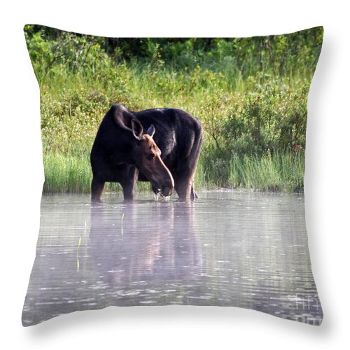 Moose Throw Pillow featuring the photograph Dinner Time by Lloyd Alexander