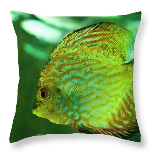 Marine Life Throw Pillow featuring the photograph Discus Fish by Diego Re