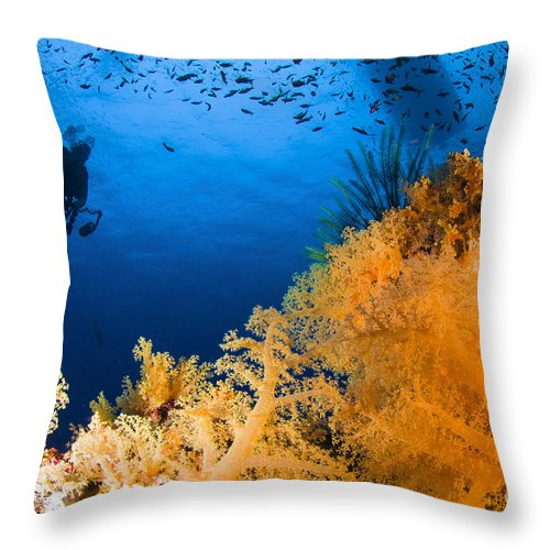 Diver Throw Pillow featuring the photograph Diver Hovering Over Soft Coral Reef by Todd Winner