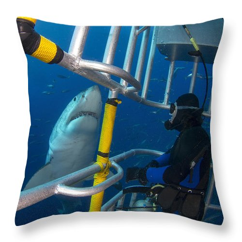 Carcharodon Carcharias Throw Pillow featuring the photograph Diver Observes A Male Great White Shark by Todd Winner