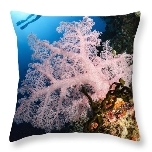 Diver Throw Pillow featuring the photograph Diver Over Soft Coral Seascape by Todd Winner