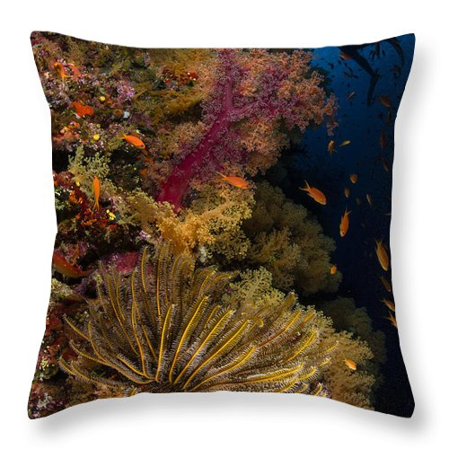 Crinoid Throw Pillow featuring the photograph Diver Swims By Soft Corals And Crinoid by Todd Winner