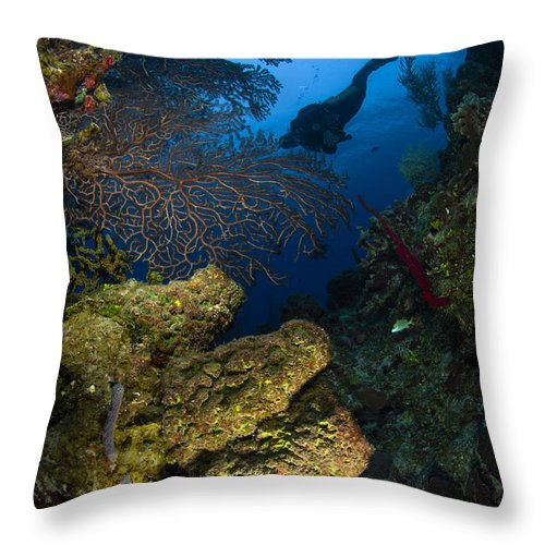 Diver Throw Pillow featuring the photograph Diver Swims Over A Reef, Belize by Todd Winner