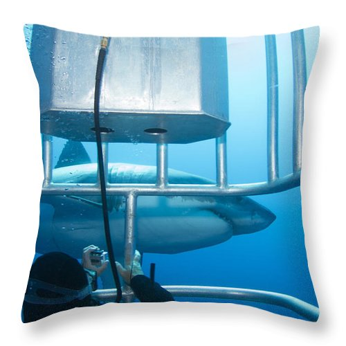Carcharodon Carcharias Throw Pillow featuring the photograph Diver Taking A Photo Of A Male Great by Todd Winner