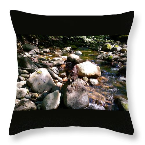 Creek Throw Pillow featuring the photograph Divide Creek by Linda Hutchins