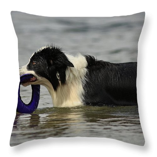 Dog To The Rescue Throw Pillow featuring the photograph Dog To The Rescue by Inspired Nature Photography Fine Art Photography