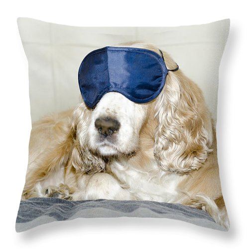 Dog Throw Pillow featuring the photograph Dog With A Sleep Mask by Mats Silvan
