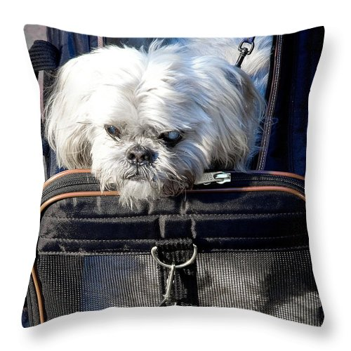 Dog Throw Pillow featuring the photograph Doggie To Go by Burney Lieberman