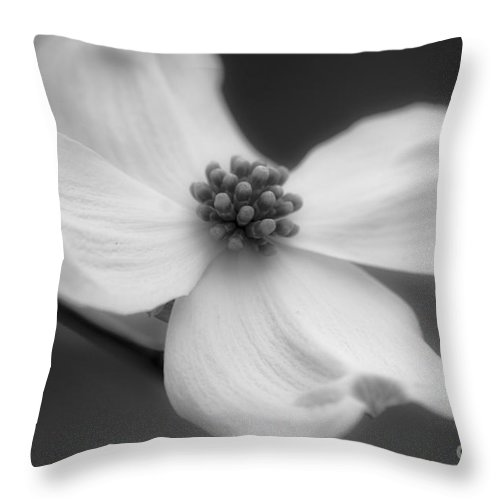 Flower Throw Pillow featuring the photograph Dogwood by Karen Lewis