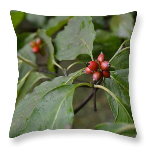 Dogwood Throw Pillow featuring the photograph Dogwood by Mary Zeman