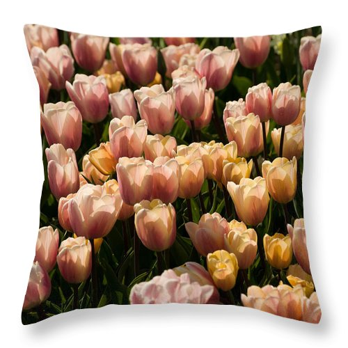 Tulip Throw Pillow featuring the photograph Dominoes by Trish Tritz