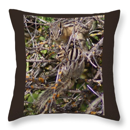 Chipmunks Throw Pillow featuring the photograph Dos Munks by Ben Upham III
