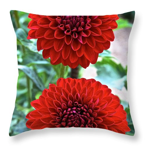 Landscape Throw Pillow featuring the photograph Double Decked Dahlia by Susan Herber
