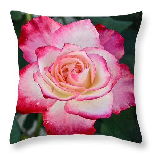 Flowers Throw Pillow featuring the photograph Double Delight by Diana Hatcher