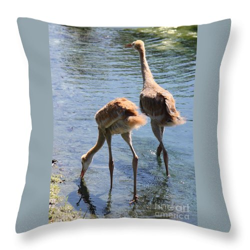 Sandhill Crane Throw Pillow featuring the photograph Sandhills Double Dipping by Carol Groenen