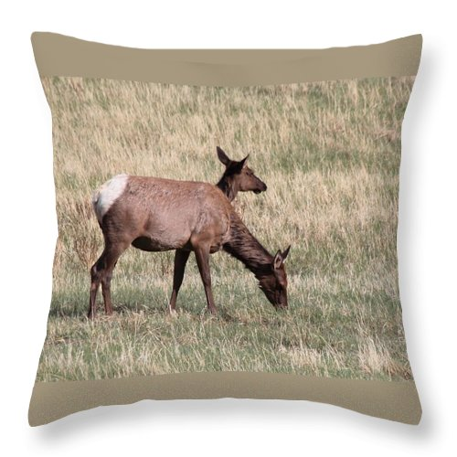 Elk Throw Pillow featuring the photograph Double Vision by Dana Bechler
