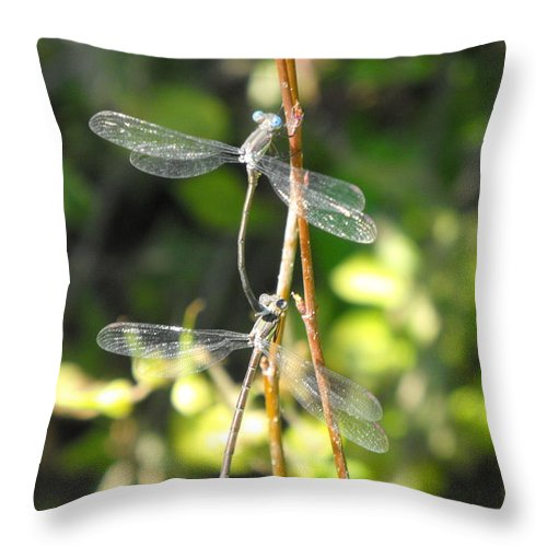 Dragonflies Throw Pillow featuring the photograph Dragonflies by Paulina Roybal