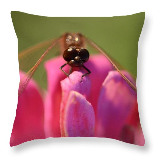 Dragonfly Throw Pillow featuring the photograph Dragonfly On Pink Flower by Bob Christopher