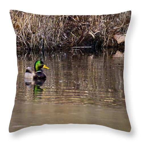 Usa Throw Pillow featuring the photograph Drake In The Pond by LeeAnn McLaneGoetz McLaneGoetzStudioLLCcom