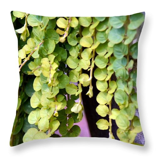Draping Throw Pillow featuring the photograph Draping by Maria Urso