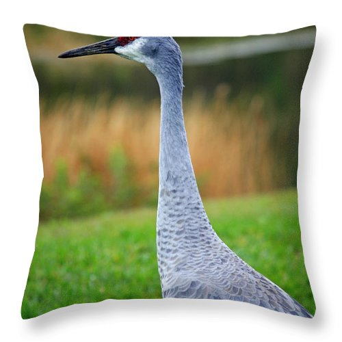 Sandhill Crane Throw Pillow featuring the photograph Dreaming Sandhill Crane by Carol Groenen