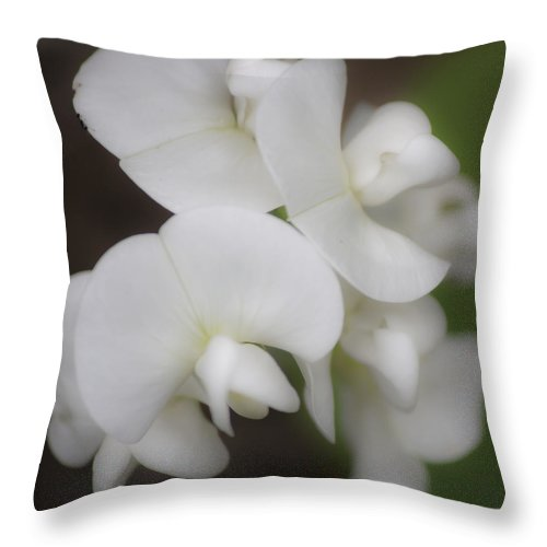 Sweet Pea Throw Pillow featuring the photograph Dreamy White Sweet Pea Squared by Teresa Mucha