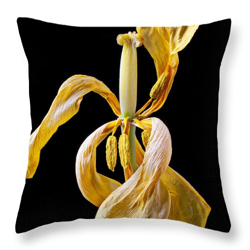 Dead Throw Pillow featuring the photograph Dried Tulip by Garry Gay