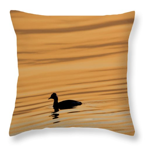 Duck Throw Pillow featuring the photograph Duck On Golden Water by Rico Besserdich