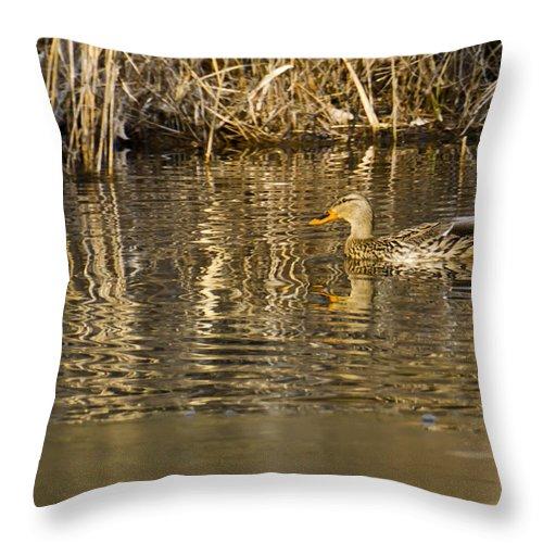 Usa Throw Pillow featuring the photograph Duck Ripples by LeeAnn McLaneGoetz McLaneGoetzStudioLLCcom