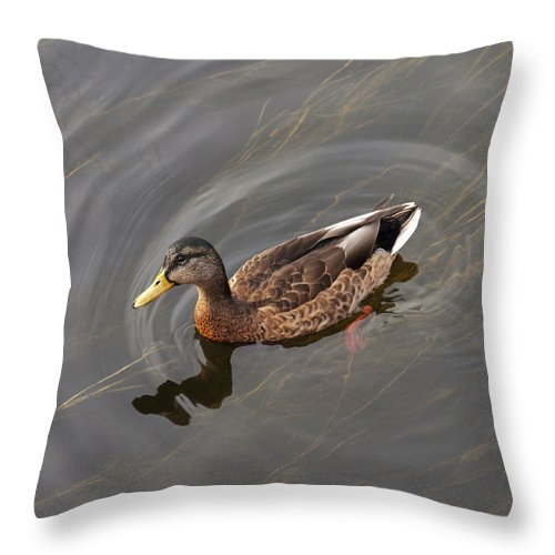 Bird Throw Pillow featuring the photograph Duck Swimming In Clear Water St by Keith Levit