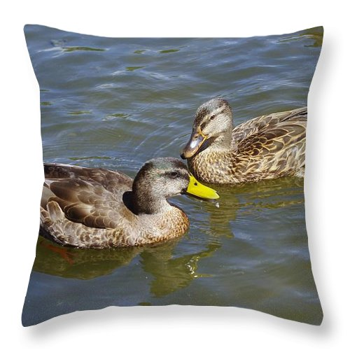Ducks Throw Pillow featuring the photograph Ducks In The Sun by Jeff Swan