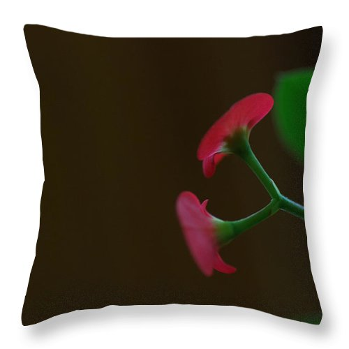 Crown Of Thorns Throw Pillow featuring the photograph Duet by Susan Capuano