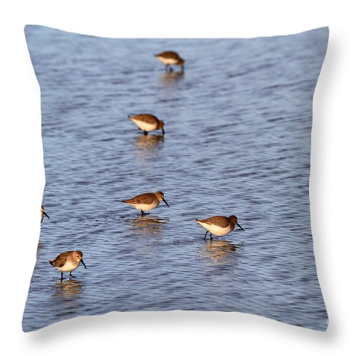 Dunlin Throw Pillow featuring the photograph Dunlins by Louise Heusinkveld