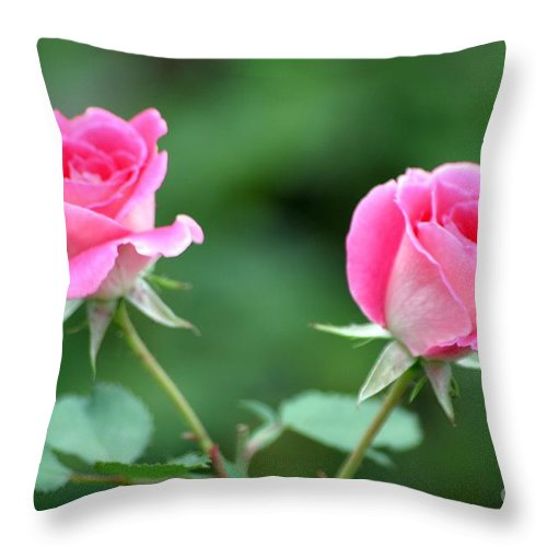 Roses Throw Pillow featuring the photograph Duo by Living Color Photography Lorraine Lynch