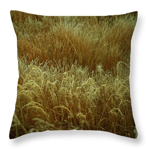 Grass Throw Pillow featuring the photograph Early Fall Frost by Mark Ivins