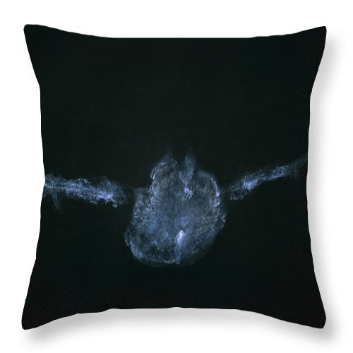 Mp Throw Pillow featuring the photograph Eastern Screech Owl Otus Asio Powder by Steve Gettle