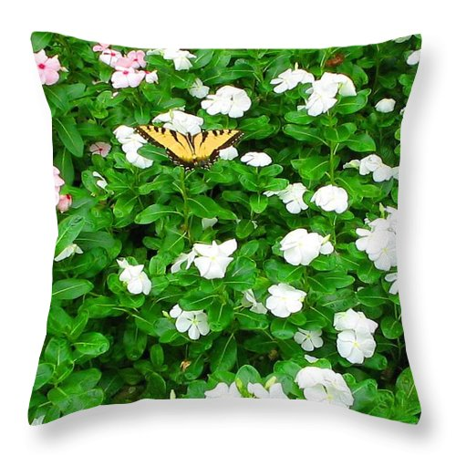 Butterfly Throw Pillow featuring the photograph Eastern Tiger Swallowtail by April Patterson