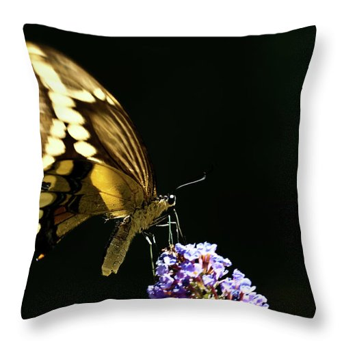 Eastern Tiger Swallowtail Papilio Glaucus Throw Pillow featuring the photograph Eastern Tiger Swallowtail Butterfly On Butterfly Bush by Onyonet Photo Studios