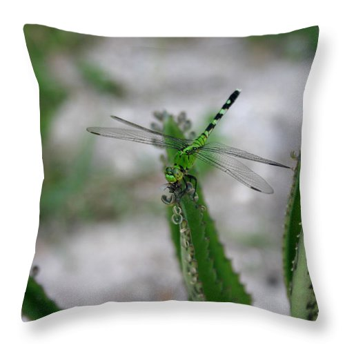 Fly Throw Pillow featuring the photograph Eating A Fly by Nina Fosdick
