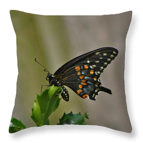 Butterfly Photographs Throw Pillow featuring the photograph Ebony Butterfly by Calvin Nelson