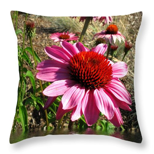 Echinacea Throw Pillow featuring the photograph Echinacea In Water by Joyce Dickens