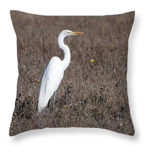 Egret Throw Pillow featuring the photograph Egret by Eric Tressler