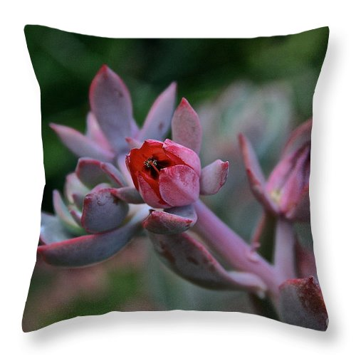 Outdoors Throw Pillow featuring the photograph Electric Glo Blossom by Susan Herber