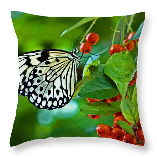 Elegant Rice Paper Butterfly On Berry Tree Throw Pillow featuring the photograph Elegant Rice Paper Butterfly On Berry Tree by Inspired Nature Photography Fine Art Photography